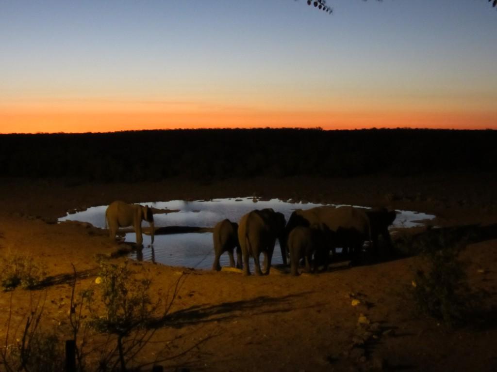 Wasserloch in der Dämmerung mit Etosha Elefanten