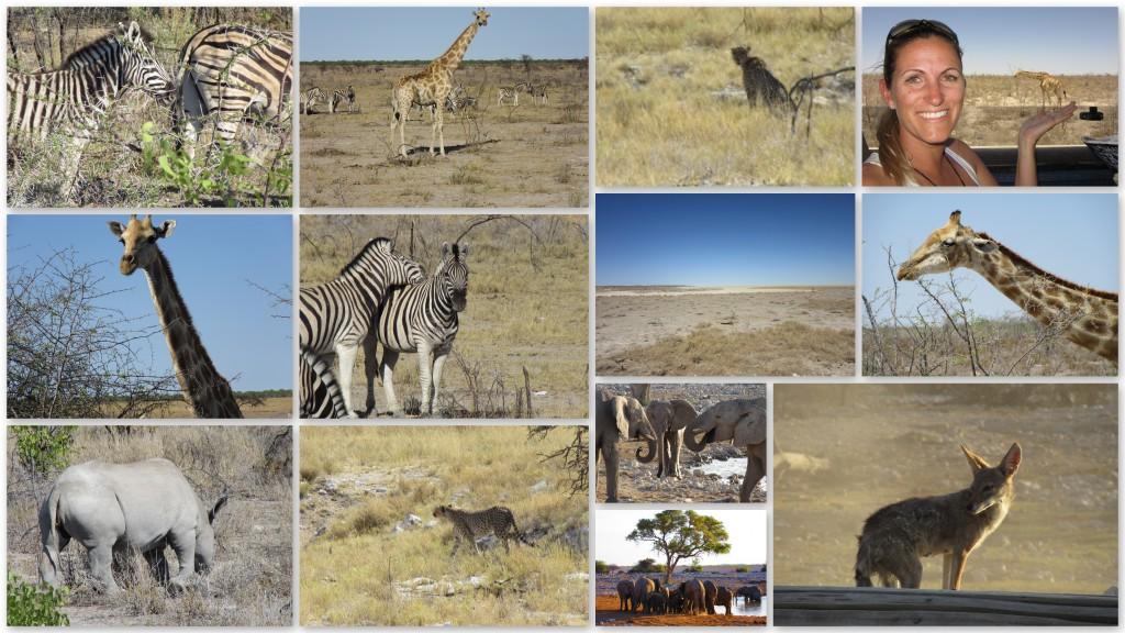Willkommen in der Tierwelt Namibias Etosha Nationalpark