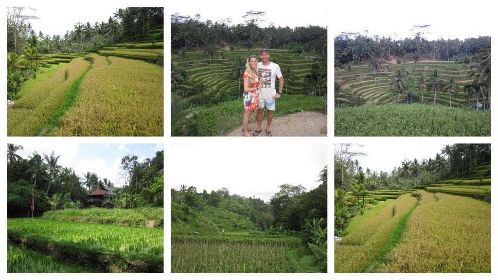 Reisterassen-in-Bali