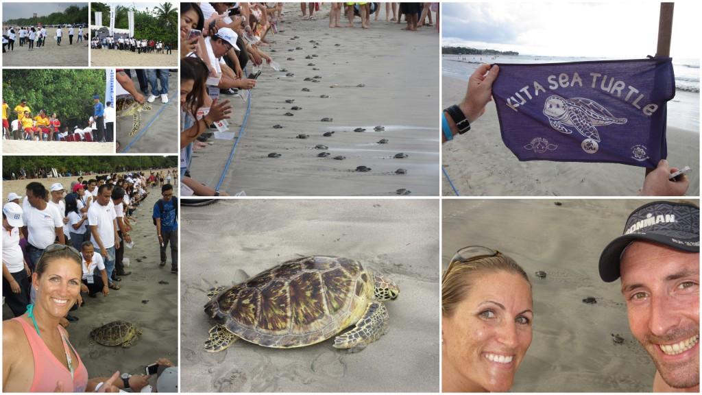 Schildkröten-Aktion-auf-Bali