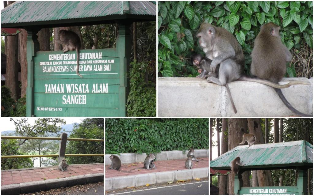 Monkeys-Bali-Munduk