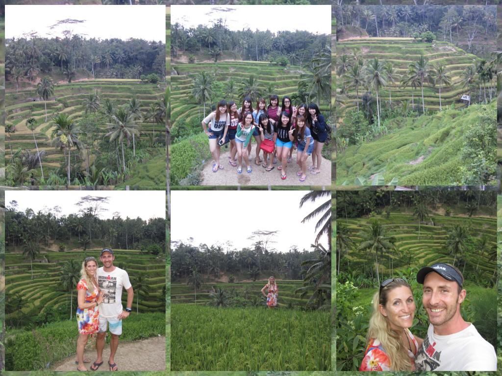 Reisfeld-Bali