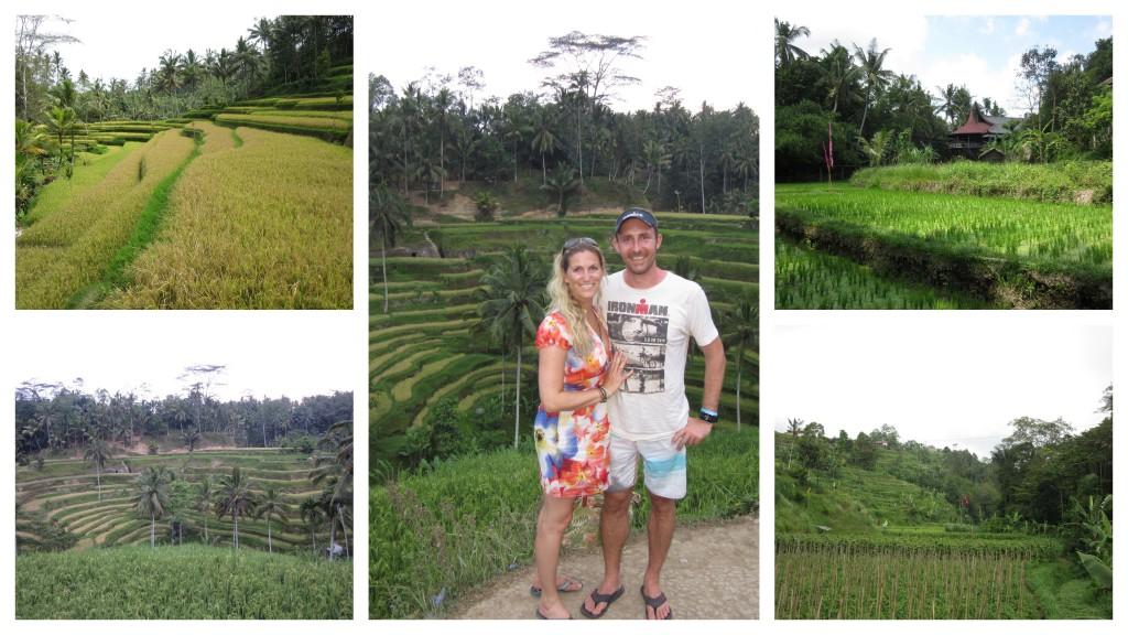 Ricefield-Bali
